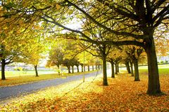 Tree. View of the beautiful autumn tree Stock Image