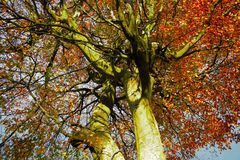 Tree. View of the beautiful autumn tree Royalty Free Stock Images