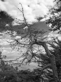A tree with a view. Bent, twisted, gnarled tree in Winter growing beside the seashore with a view from it of bushes and an incoming tide on the beach and gray Stock Image