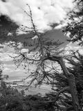 A tree with a view. Black white tree hanging s view of sea harbour Stock Image