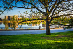 Tree and view of Druid Lake in Druid Hill Park, Baltimore, Maryl Royalty Free Stock Image