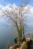 Tree with view on lake - Anguillara Sabazia Royalty Free Stock Photo