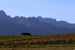 The Tree. View over a farm in Africa with tree and mountains as background Stock Photos