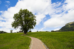 The tree. View of a tree with a path in Seiser Alm with green fields, blue sky and clouds Royalty Free Stock Images