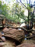 Tree View Are in Zion NP Stock Photography