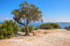 Tree and views of Javea town from San Antonio Cape Stock Photo