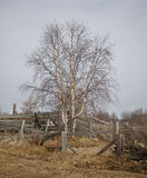 Tree in village Stock Photography