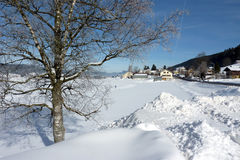 Tree and village by winter Royalty Free Stock Photography