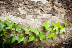 Tree Vine Royalty Free Stock Photos
