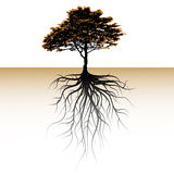 A tree with a visible root. Space for a text stock illustration