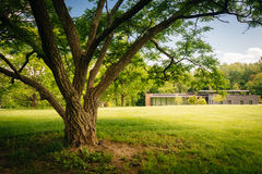 Tree and the Visitor Center at Cylburn Arboretum in Baltimore, Stock Photos