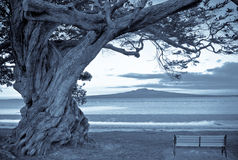 A Tree,a volcano and a bench Stock Photography