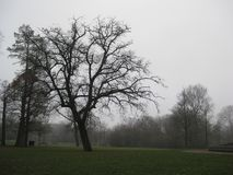A tree in the Vondelpark, Amsterdam royalty free stock photos