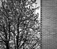 Tree and wall. Detail of a modern house with a brick facade, next to a tree stock photos