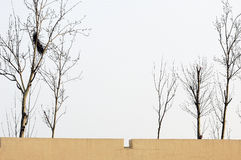 Tree and wall Stock Image