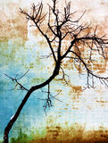 Tree on a wall Royalty Free Stock Photos