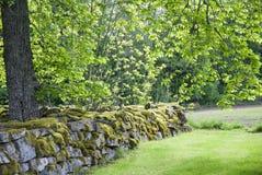 Tree and wall. En vy över en mossig stenmur nära ett gammalt kapell / kyrka Stock Photography