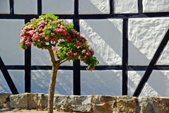 Tree and wall Stock Photo