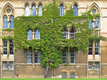 Tree on wall of Christ Church college Royalty Free Stock Photos