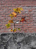 Tree on wall Stock Image