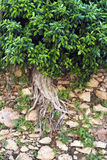 Tree in Wall Stock Photography