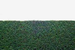 Tree wall. Isolate nature white Royalty Free Stock Photos