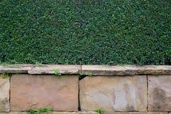 Tree wall. Nature stone blackground Royalty Free Stock Photos