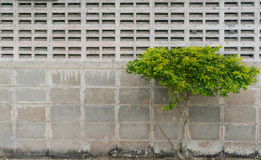 Tree at the wall Royalty Free Stock Images