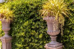 Tree wall with Roman style plant pots stock image
