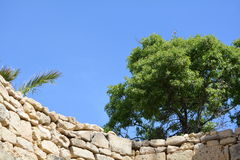 Tree on wall Stock Photography