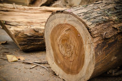 Tree that was being cut. Stock Images