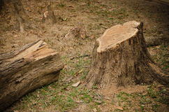 Tree that was being cut. Stock Image