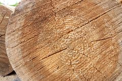 The tree was cut down close Royalty Free Stock Image
