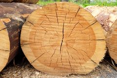 The tree was cut down close Stock Images