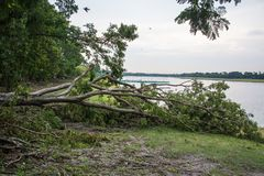 The tree was destroyed by the storm`s intensity Royalty Free Stock Photos