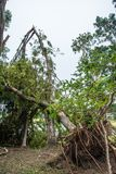 The tree was destroyed by the storm`s intensity Royalty Free Stock Images