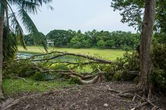 The tree was destroyed by the storm`s intensity.  Royalty Free Stock Image