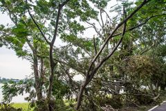 The tree was destroyed by the storm`s intensity Stock Image