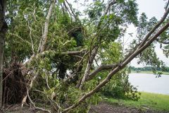 The tree was destroyed by the storm`s intensity.  Stock Photo