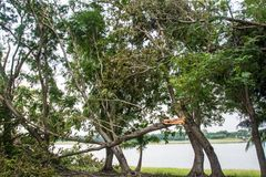 The tree was destroyed by the storm`s intensity.  Stock Images