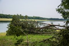 The tree was destroyed by the storm`s intensity.  Stock Photography