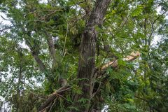 The tree was destroyed by the storm`s intensity.  Royalty Free Stock Images
