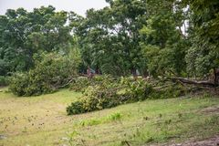 The tree was destroyed by the storm`s intensity Stock Images