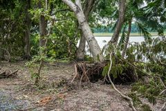 The tree was destroyed by the storm`s intensity Royalty Free Stock Photo