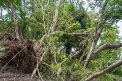 The tree was destroyed by the storm`s intensity.  Royalty Free Stock Photography