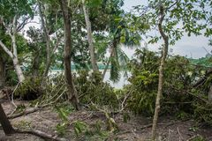 The tree was destroyed by the storm`s intensity.  Stock Image