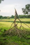 The tree was destroyed by the storm`s intensity.  Royalty Free Stock Photos