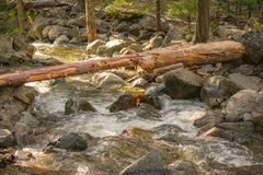 Fallen Tree Over Merced River In Yosemite Park stock images