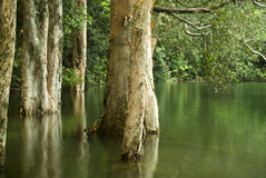 Tree in water. It is some tree in water in spring Stock Images