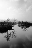 Tree on the water. Wetlands view in hangzhou china Stock Photos